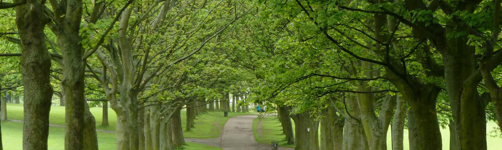Leeds Forest
