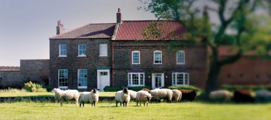 Journey Sheep