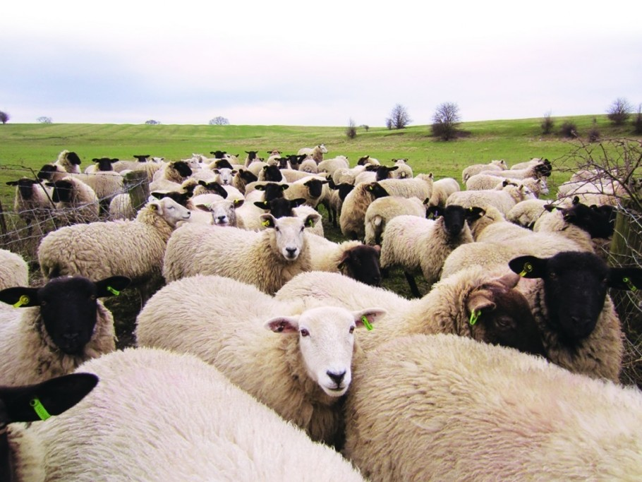 Properties Sheep 2
