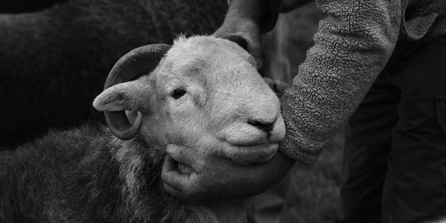 Herdy herdysleep wool DSC0520